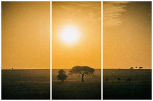 Sunrise in safari. Serengeti National Park, Tanzania (Africa)